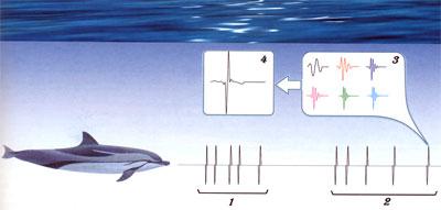 сонар подводной лодки звук слушать